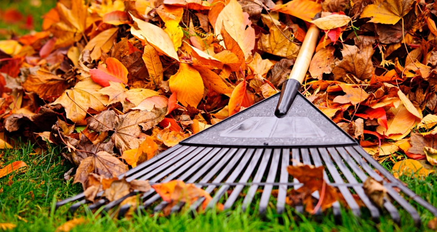 Autumn for Digital Publishers…and EverythingAfter